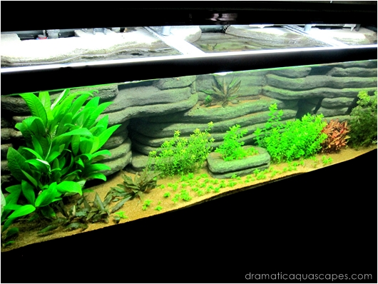 Get Inspired With These 9 Diy Aquarium Backgrounds Tfcg