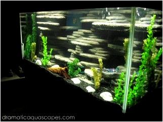 of homemade aquarium and semi-aquatic backgrounds, filters, lighting ...
