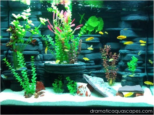 Dramatic Aquascapes Diy Aquarium Background Kodey Turner In The Community Spotlight