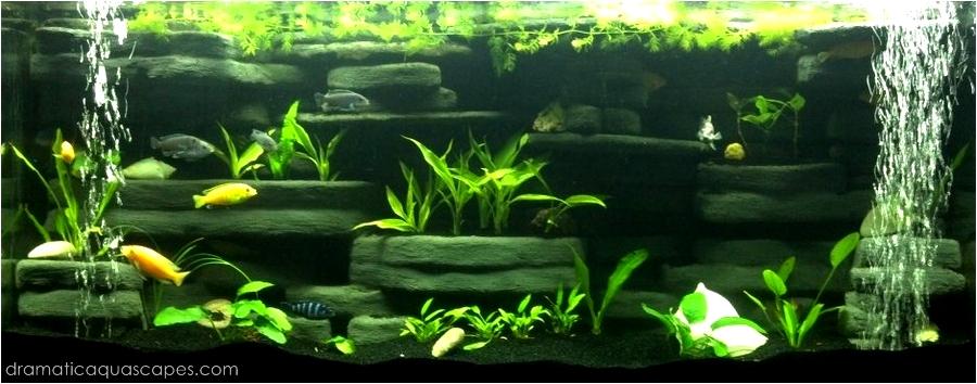 bild aquarium anzeigen wallpapers - photo #32
