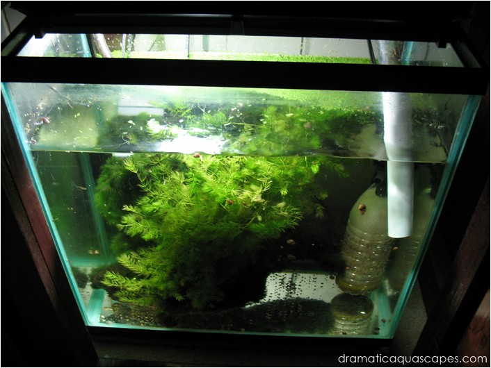 Dramatic AquaScapes - Do-It-Yourself - Oil Bottle Overflow ...