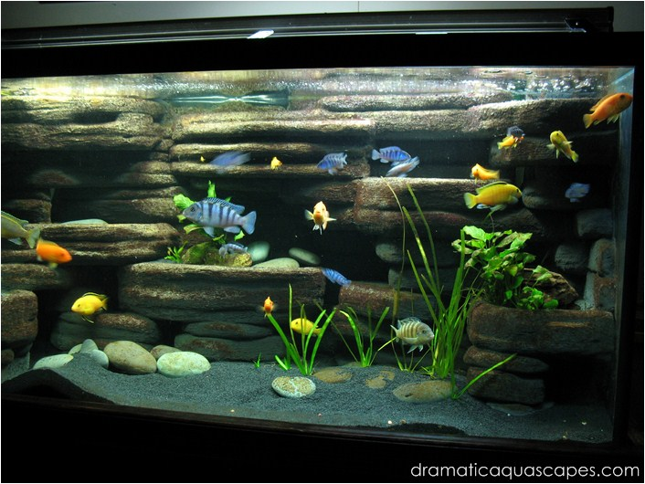 Diy aquarium background paint joy studio design gallery for Fish tank paint